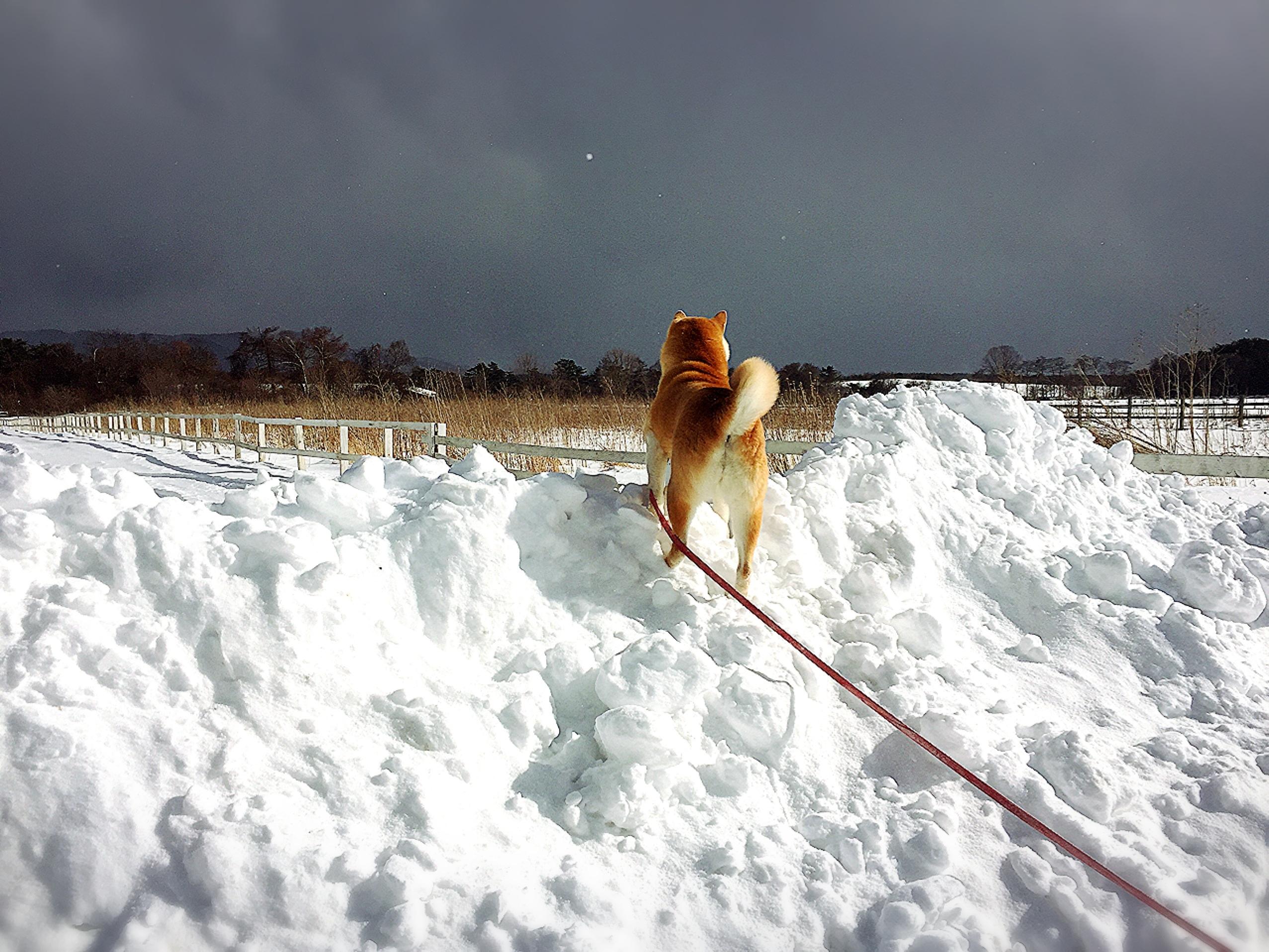 雪上ラン!