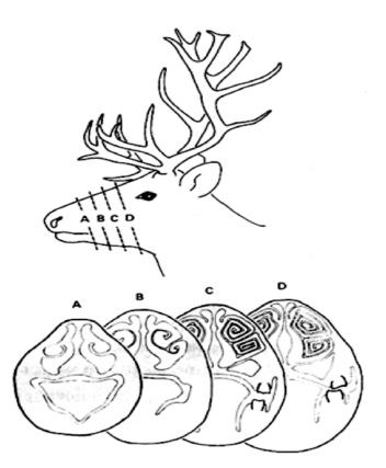 The Nasal Geometry Of The Reindeer Gives Energy Efficient Respiration 2016 The Norwegian