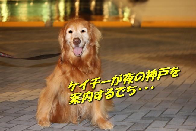 サム君きぃちゃんお楓ちゃんプール神戸夜景 002