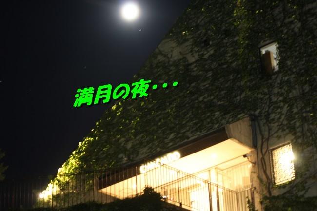 サム君きぃちゃんお楓ちゃんプール神戸夜景 040