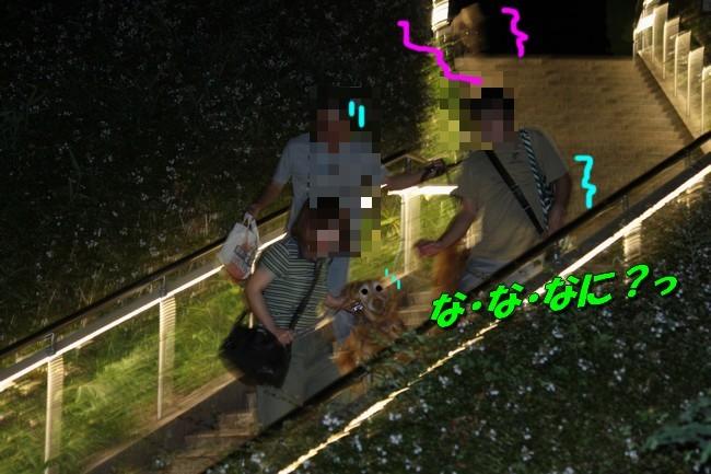 サム君きぃちゃんお楓ちゃんプール神戸夜景 047