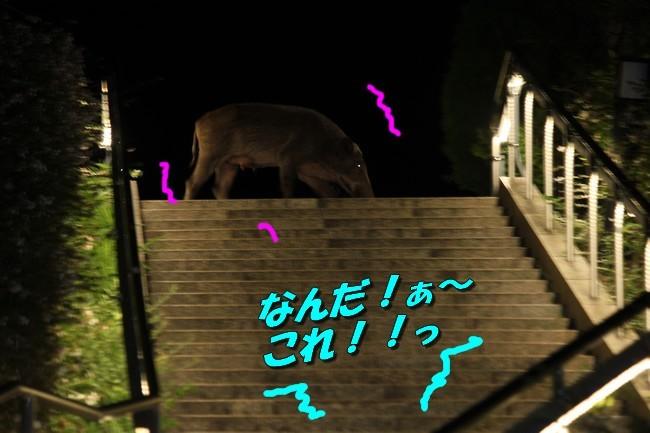 サム君きぃちゃんお楓ちゃんプール神戸夜景 049