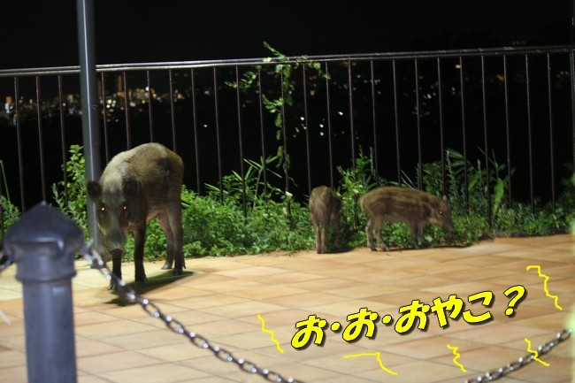 サム君きぃちゃんお楓ちゃんプール神戸夜景 055