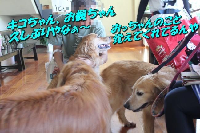 サム君きぃちゃんお楓ちゃんプール神戸夜景 065