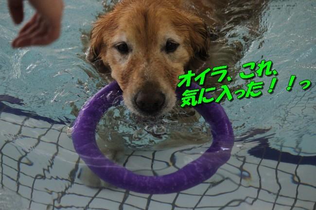 サム君きぃちゃんお楓ちゃんプール神戸夜景 206