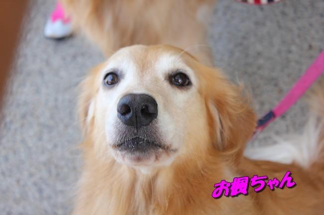 サム君きぃちゃんお楓ちゃんプール神戸夜景 512