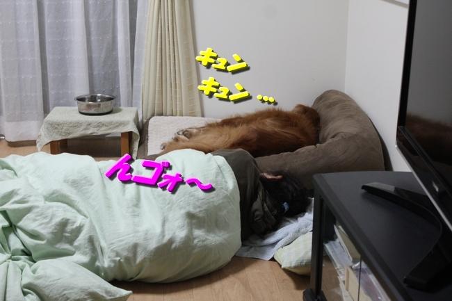 母子爆睡 002