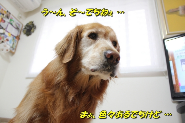 ひよこちゃん表情 025