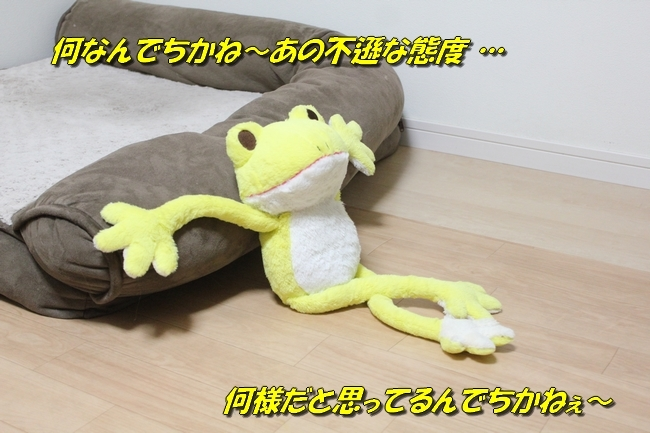 シュレッダー黄色カエル 020