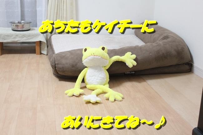 シュレッダー黄色カエル 023