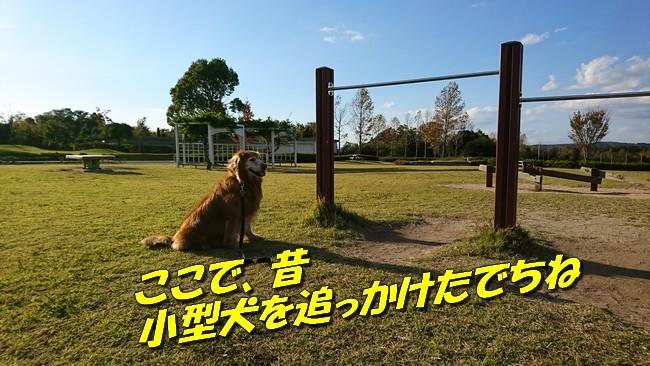 DSC_1407.jpg