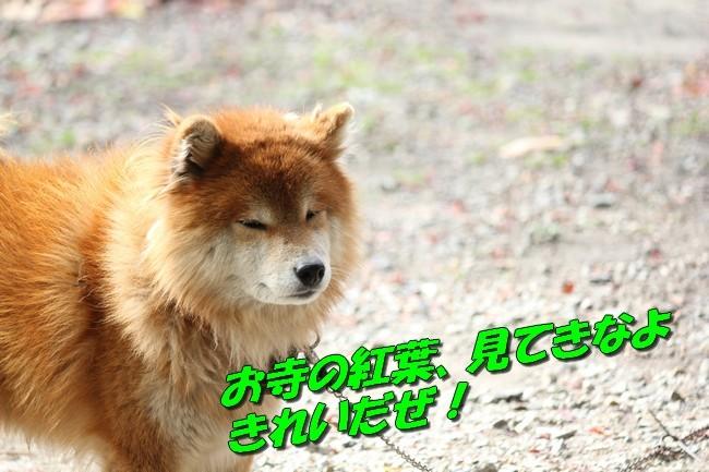 IMG_7956.jpg
