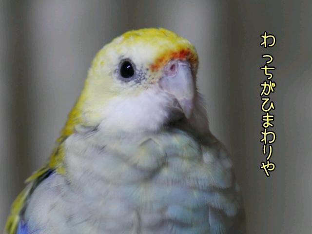 2016110523151178a.jpg