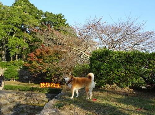 9笹山城址