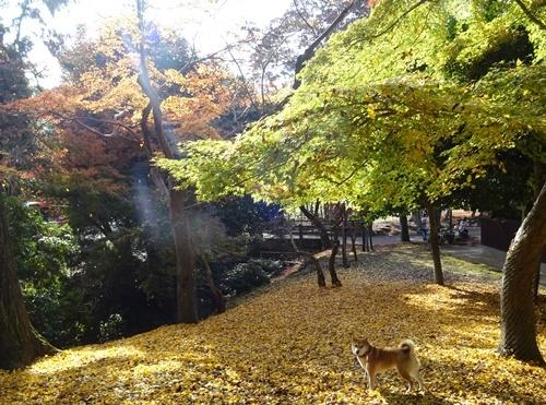 3キレイな秋