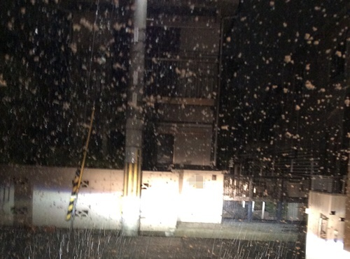 1雪降りました