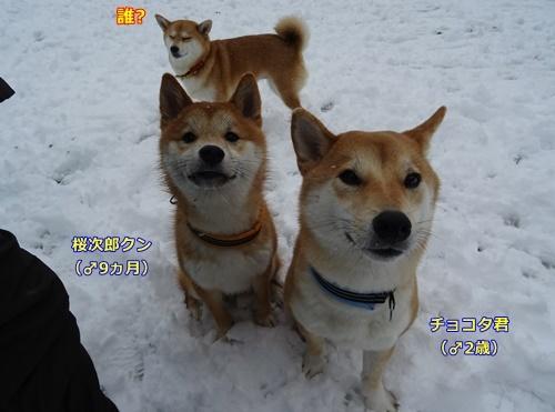1チョコ太と桜次郎