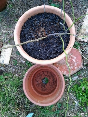 植え替え鉢比較