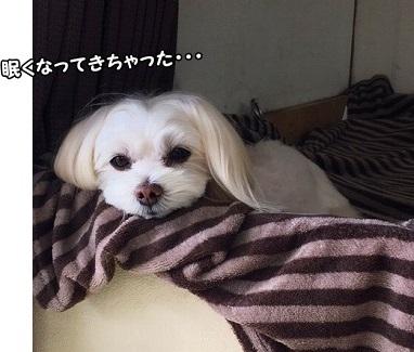 眠くなってきた様子^m^