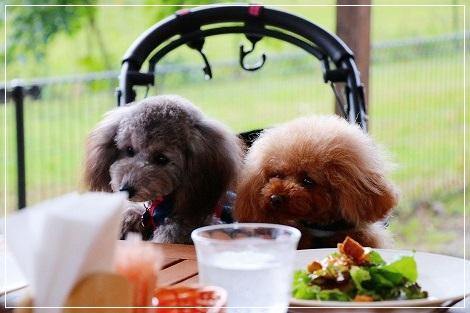 食べたいよねー^m^マロンくんとチロルちゃん