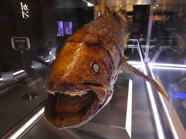 「生きている化石」と呼ばれる魚は何?