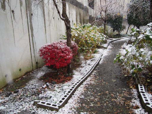 20161124・11月なのに初雪1-24・7時19分