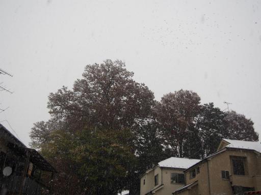 20161124・11月なのに初雪1-22