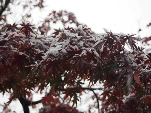 20161124・11月なのに初雪2-03・7時20分