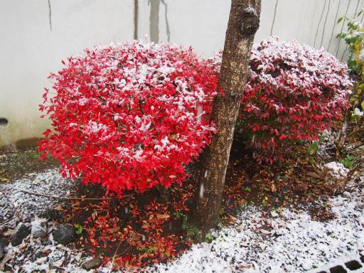 20161124・11月なのに初雪2-02・7時19分