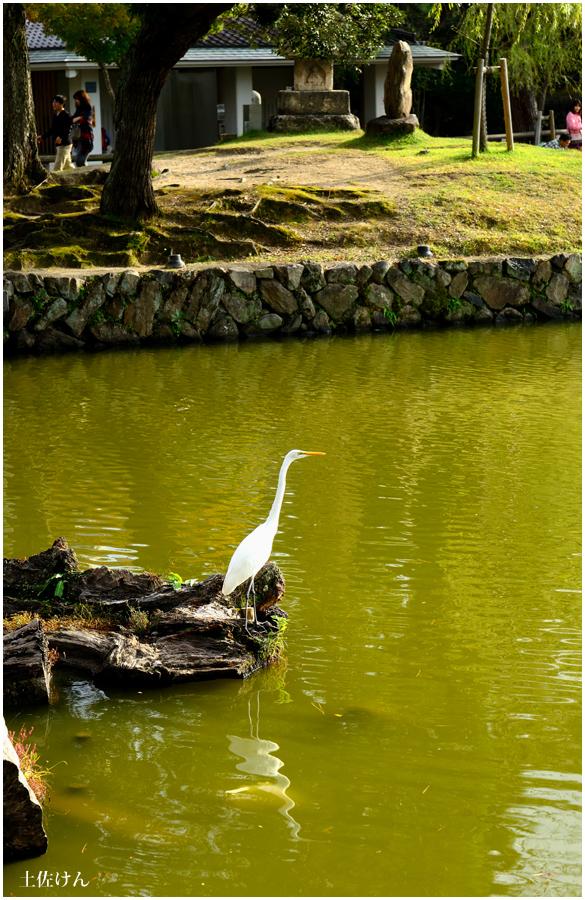 奈良散策1