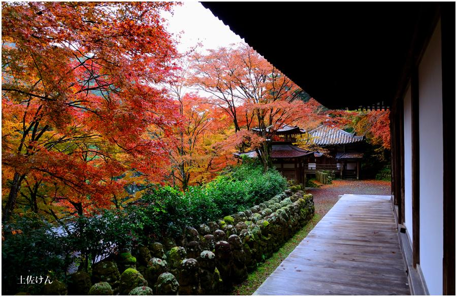 錦秋の京都3