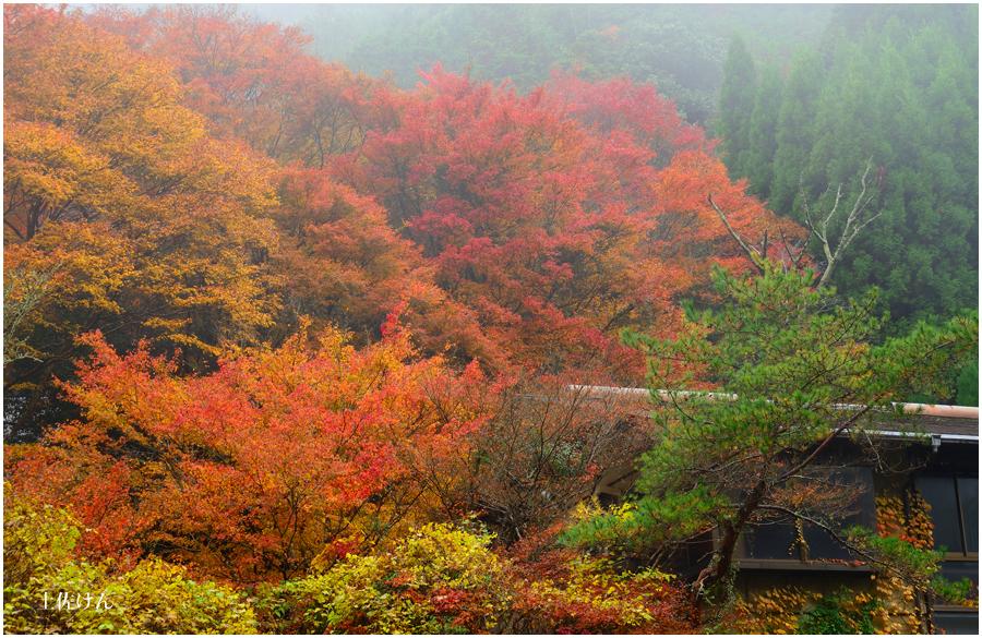 錦秋の京都5