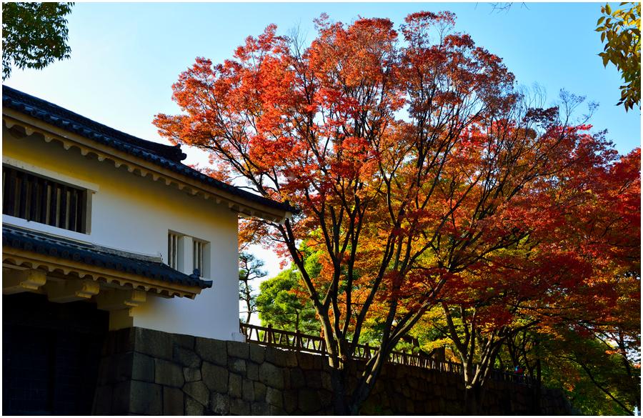 秋の大阪城・助手編2