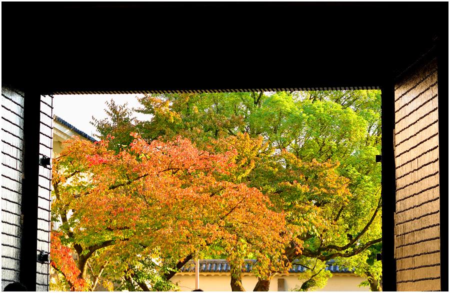 秋の大阪城・助手1