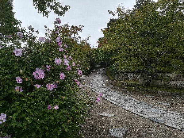 shinnyodou-kyoto-006.jpg