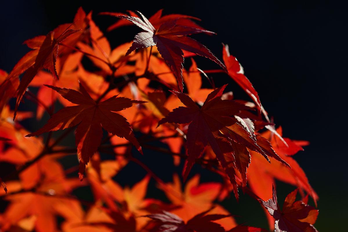 koumyouji_161122_0935_1200.jpg