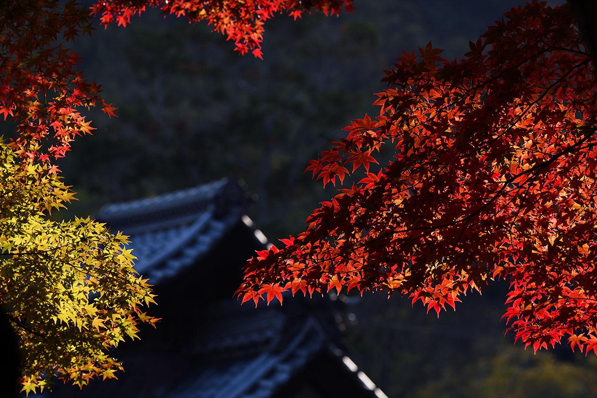 koumyouji_161122_1043_1200.jpg