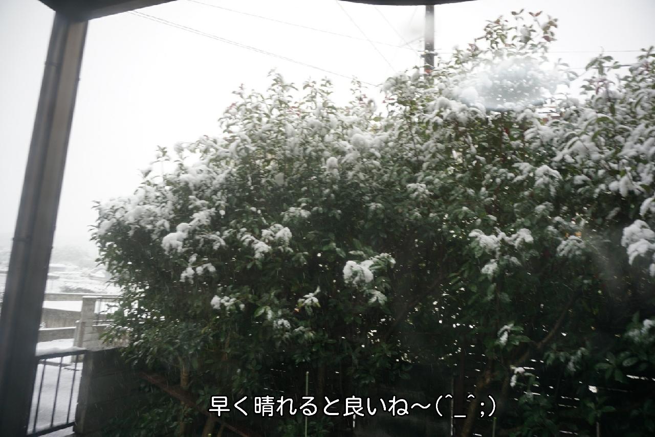 16-11-24-09-56-33-116_deco.jpg