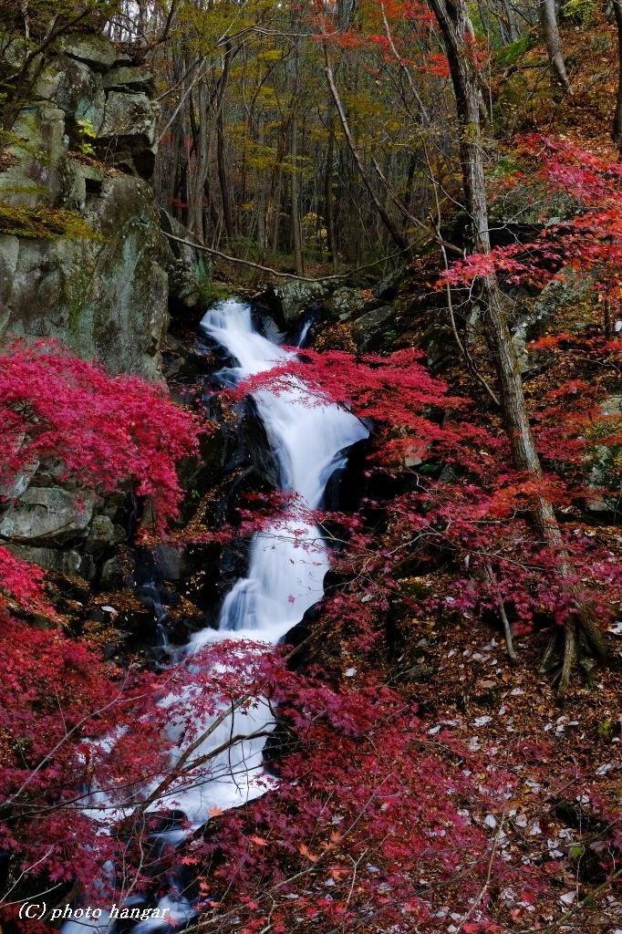 白滝と紅葉