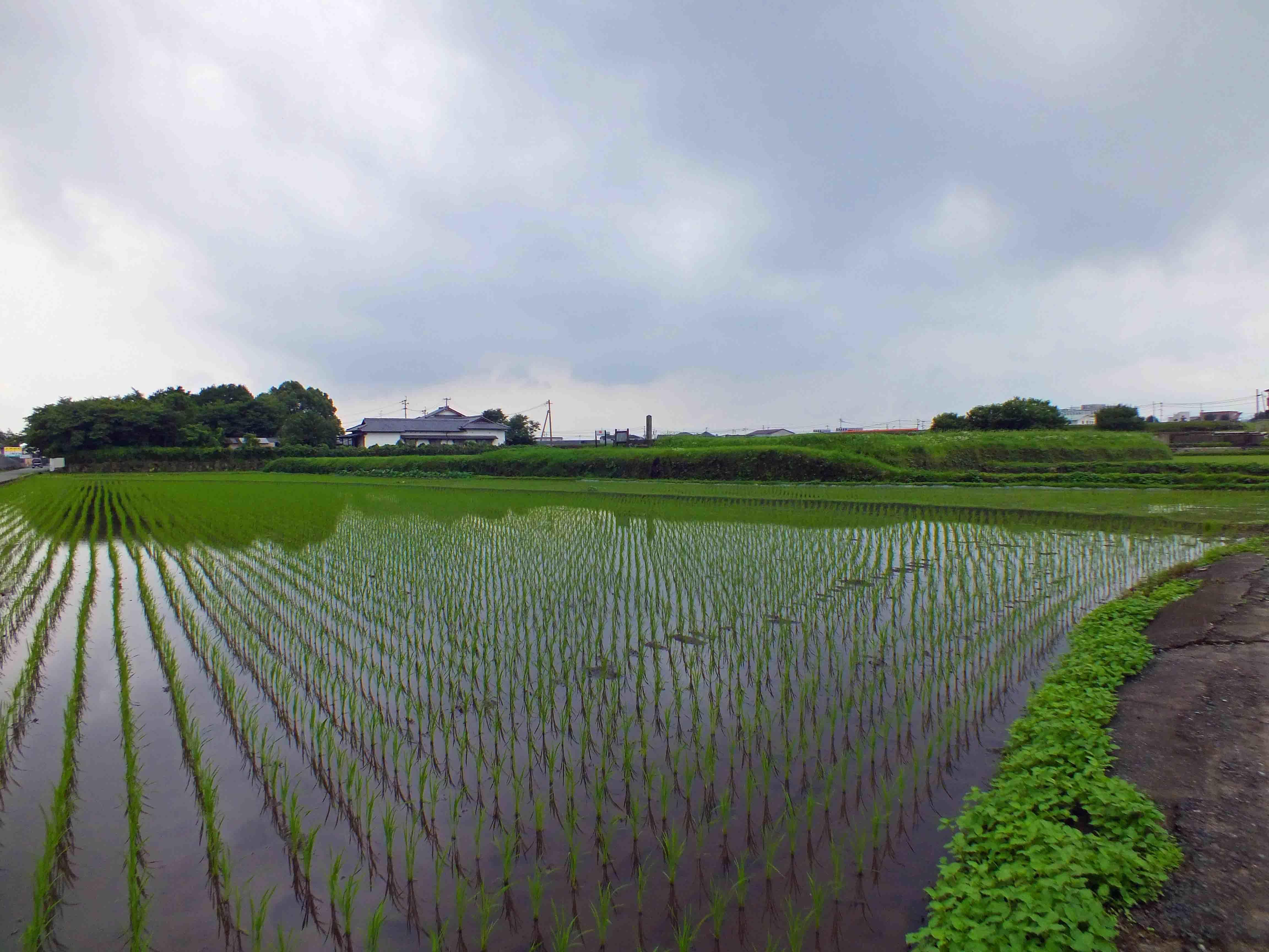 菊池城 遠景