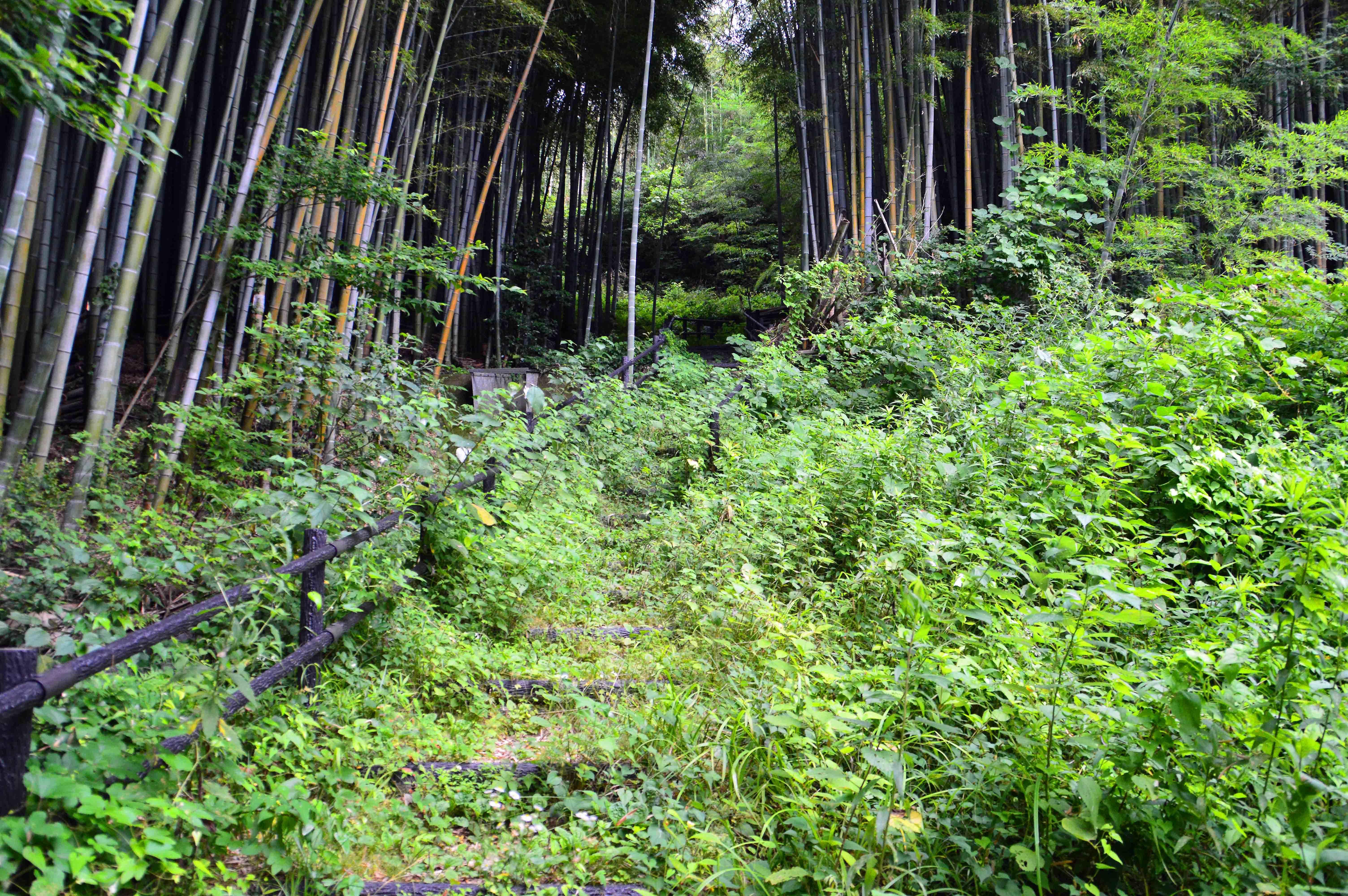 八幡山館 秀次館への大手路