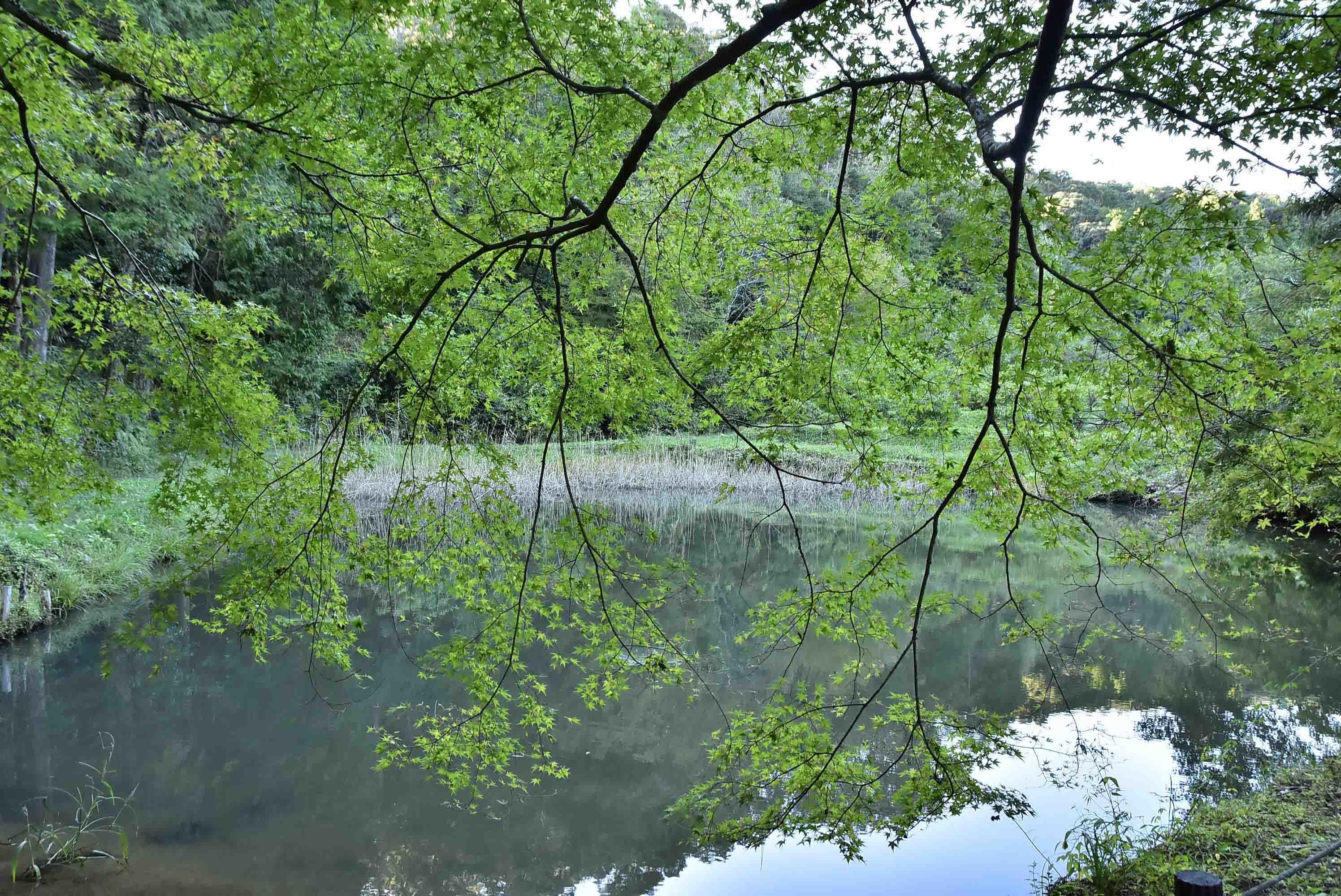 医王寺 片葉の葦の池