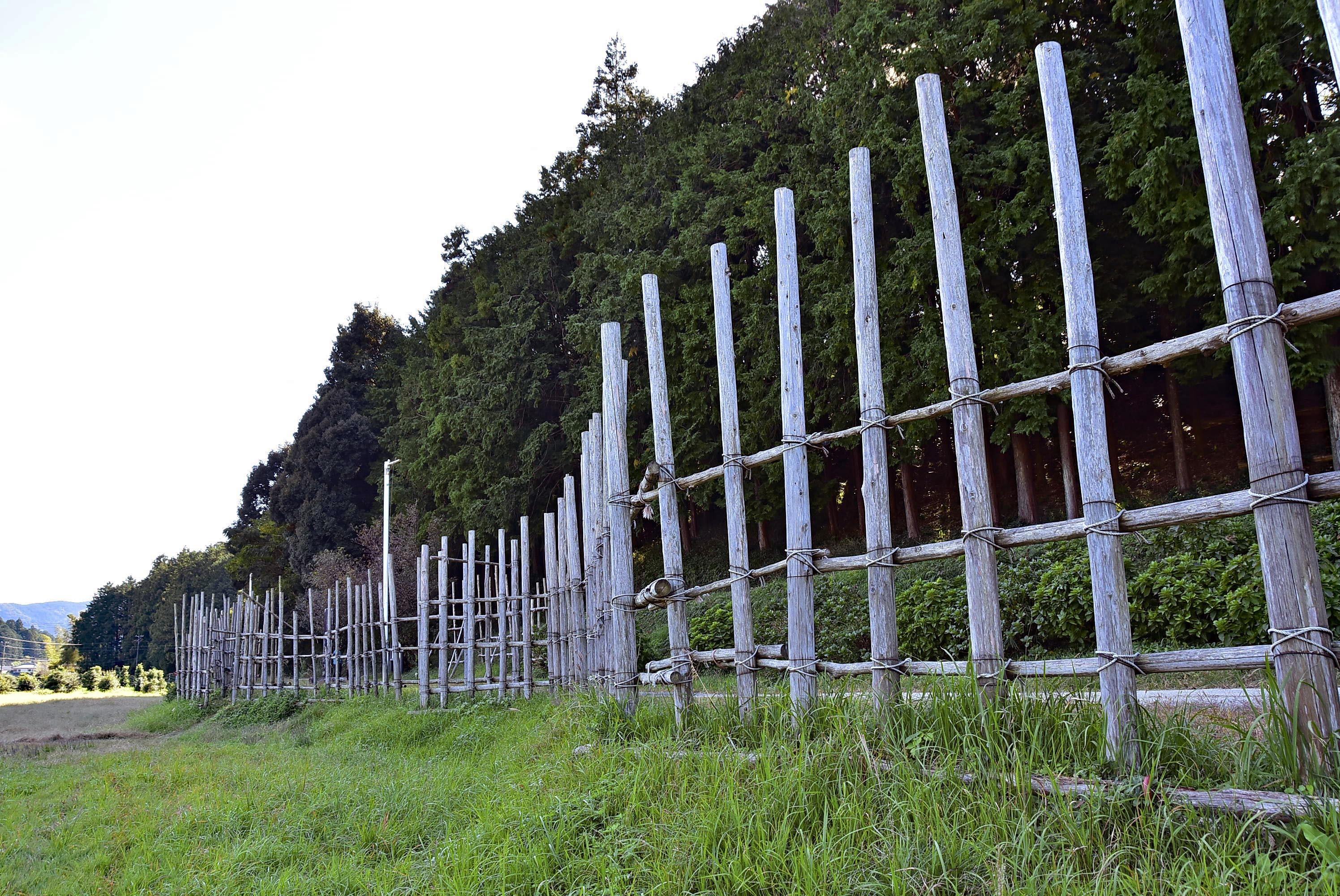 設楽原古戦場 復元馬防柵