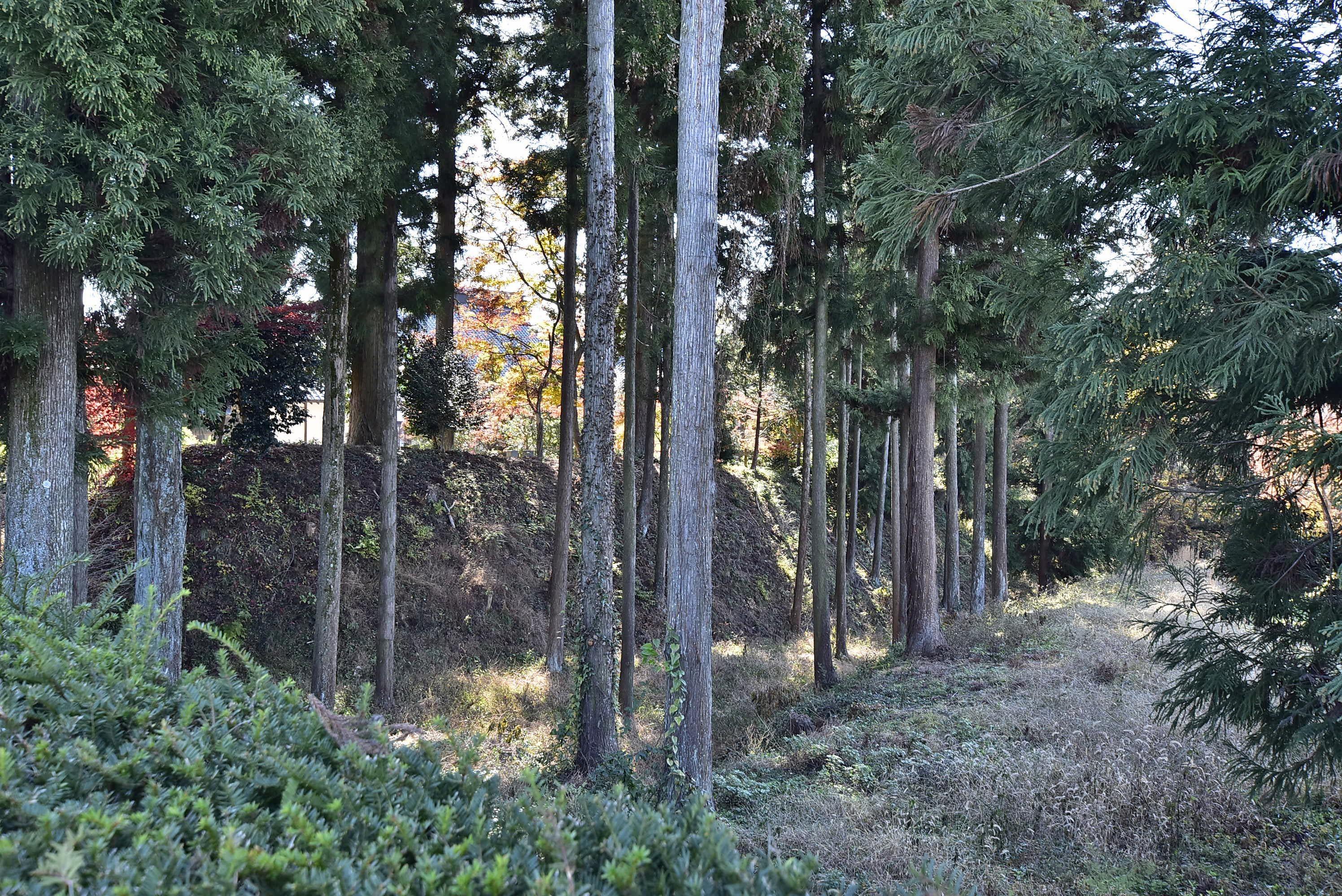 松岡城 松源寺背後の堀
