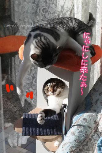 DSC_9946_.jpg