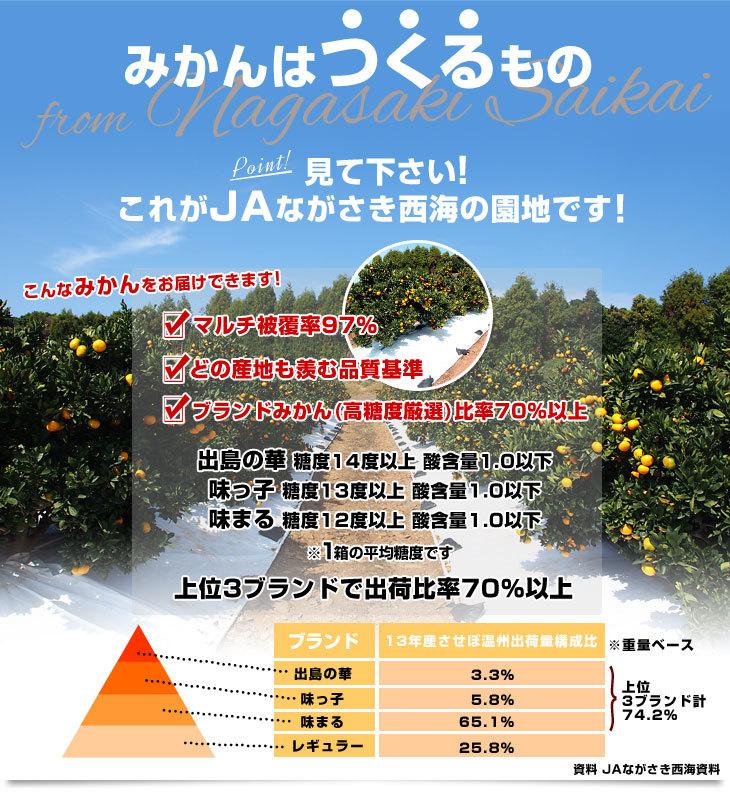 d_orange276_01.jpg
